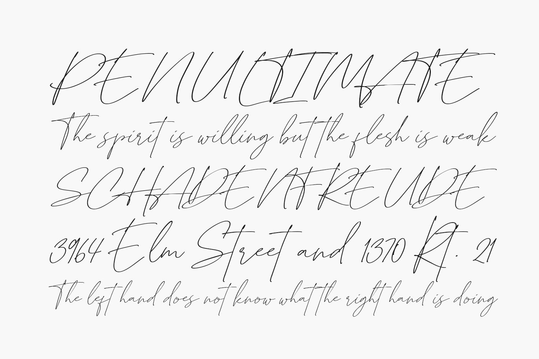 British Shorthair Free Font