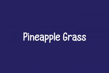 Pineapple Grass Free Font